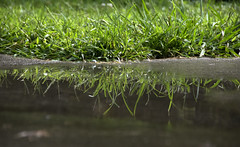 Puddled Reflection (shannon_blueswf) Tags: puddle reflection grass rainy rain rainyday fun mirror water nikon nikond3300 nikonphotography nature