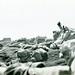Marines on Beach, Iwo Jima, February 1945