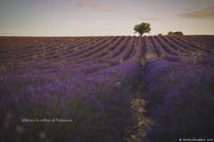 Alba a Valensole (Matteo Rinaldi.it) Tags: provenza francia valensole lavanda lavandes lavender stampa