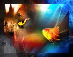 Determination (mfuata) Tags: determination kararlılık fish balık look bakış depth derinlik cat kedi setting ortam