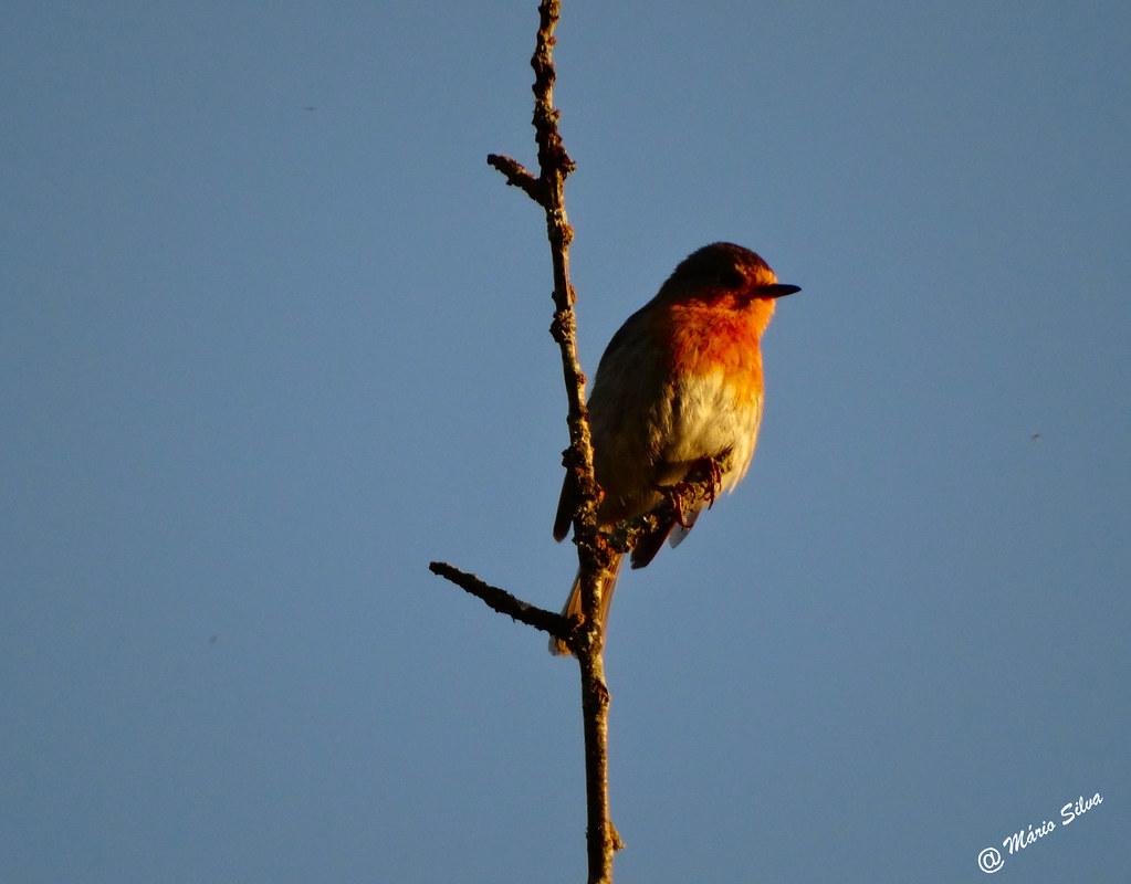 Águas Frias (Chaves) - ... a ave no fino ramo ...