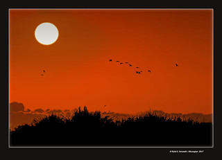 Alba a la marjal d'Albalat (Albalat's marsh at dawn) Albalat de la Ribera, la Ribera Baixa, València, Spain