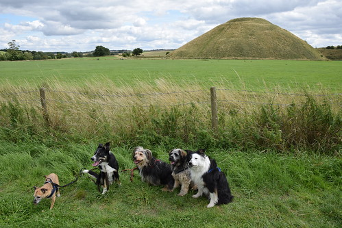 The dogs at Silbury Hill