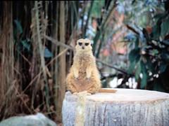 1994_Singapore_2016-07-18_Photo_249 (Matthias & Paula) Tags: singapore sentosa kuala lumpur malaysia cameron highlands zoo japanese gardens