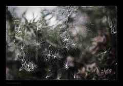 Web and seeds 10