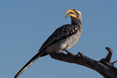 P7200169 (hugoholunder) Tags: südafrika botswana juli 2017 national park makgadikgadi leroo la tau hotel