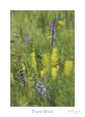 Prairie Wind (baldwinm16) Tags: il illinois september landscape midwest native nature naturepreserve prairie season summer sunrise wildflowers abstract wind natureofthingsphotography