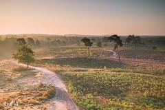 Sunrise (Maasduinen, Netherlands) (Renate van den Boom) Tags: 09september 2017 boom europa heide jaar landschap limburg maand maasduinen natuur nederland quin renatevandenboom zon zonsopkomst