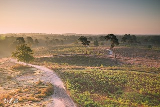 Sunrise (Maasduinen, Netherlands)