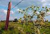 DSCF8931 (TARmAdAmA) Tags: flower niederrhein fence zaun wiese fujix100 newphotographer