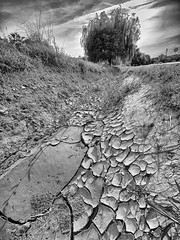 Somewhere along the road... (un2112) Tags: laowa laowa75 hungary august gx80 blackandwhite bw monochrome countryside summer pit mende