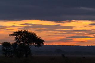 Tarangire Dawn