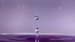 A drop in the ocean (AlistairBeavis) Tags: alistairbeavis alistairbeaviscom drop drip droplet water liquid flash strobist macro purple 52weeks