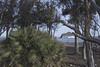 Pareja de genoveses. (elojeador) Tags: eucalipto mar agua playa genoveses playadelosgenoveses arena piedra grava tronco pareja hombre mujer palmito fueradegénova elojeador