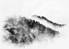 Partners (John Westrock) Tags: blackandwhite mountains clouds trees mtrainiernationalpark nature washington pacificnorthwest canoneos5dmarkiii canonef100400mmf4556lisusm landscape
