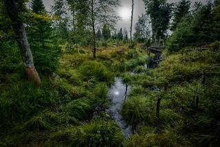 A foggy morning in a bog