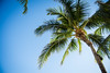 Hawaii-25 (emilyanntruong) Tags: royal hawaiian waikiki royalhawaiian pinkpalace