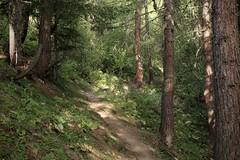 Grimentz- Bendolla (bulbocode909) Tags: valais suisse grimentz bendolla vald'anniviers forêts sentiers arbres nature montagnes vert cabanedesbecsdebosson