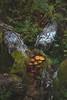Mushrooms (~ Maria ~) Tags: tyresta forest autumn nature nationalpark sweden september 2017 mariakallinphotography nikond800 nikon2470mm moss mushrooms fallentrees