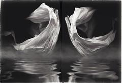 Swan Lake-11368 (Poetic Medium) Tags: moldiv blackandwhite kitcamghostbird snapseed plastic ipod reflect diptych