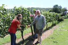 File365 (UGA CAES/Extension) Tags: grapes ugaextension cranecreekvineyards wine viticultureteam viticulture northgeorgiavineyards vineyards vines georgiawine uga