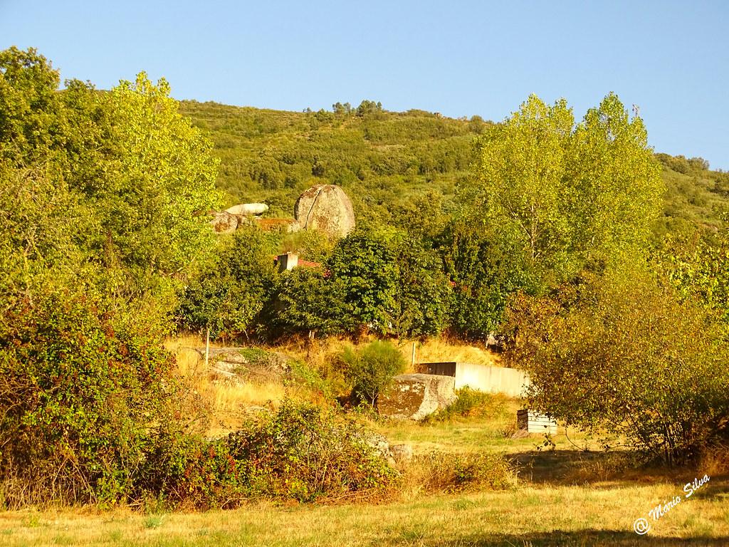 Águas Frias (Chaves) - ... vários tons de verde nas copas das árvores ...