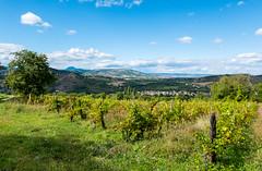 Vignes auvergnates (TotoFABRE) Tags: corent puy vignes puydedome auvergne fujifilm xm1 france clermontfd cournon volcan randonnée hiking clouds sky