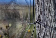 fence line waves (gnarlydog) Tags: adaptedlens refittedlens abstract rural bokeh vintagelens vintagelenseffect fencepost fenceline australia shallowdepthoffield aldis85cmf25 projectionlens