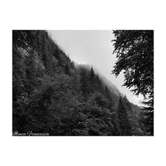 Fog (ilinca_francesca) Tags: romania alba lovephotography beginner perspective samsung black blacknwhite fog