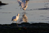 IMG_2596 (armadil) Tags: mavericks beach beaches californiabeaches bird birds egret snowyegret lowtide highlights