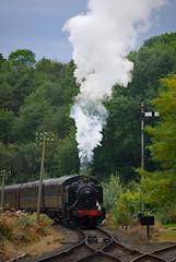 Gala Shunt (Jonathan Malpass) Tags: steamtrain steam steamgala autumnsteamgala severnvalley severnvalleyrailway svr gwr greatwesternrailway shropshire highley tankengine 1501 hawksworth panniertank