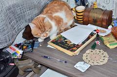 Cat vs pills (Luniul) Tags: cat redcat animal