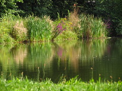 IMG_1491 (germancute) Tags: outdoor nature thuringia thüringen tree teich park plant pond