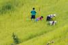 _29A0179.0817.Phiêng Ban.Bắc Yên.Sơn La. (hoanglongphoto) Tags: asia asian vietnam northvietnam northwestvietnam people life dailylife hmongpeople grouppeople hillside weeding canon canoneos5dsr canonef500mmf4lisiiusmlens tâybắc sơnla bắcyên phiêngban tàxùa người cuộcsống đờithường ngườihmông giađìnhhmông làmcỏlúa sườnđồi nhómngười giađìnhngườihmongnhổcỏcholúa hmongfamily