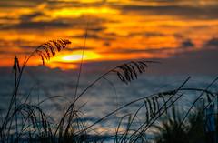 Gulf Coast Sunset (ap0013) Tags: sunset florida ocean beach gulf coast anna maria island annamariaisland gulfcoast floridasunset beachsunset oceansunset landscape hdr