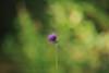 戦場ヶ原#5 (yasushiinanaga) Tags: eos6d sigma150600mm japan flower light natuer