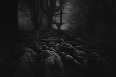 Dark places (Mimadeo) Tags: root roots scary dark fog night forest nightmare horror fear mood monochrome landscape magic tree shadow evening nature mystery mist spooky foggy darkness misty halloween woods evil creepy fantasy gothic mysterious surreal silhouette enchanted ghost atmosphere moonlight twisted haunted eerie black white blackandwhite moody