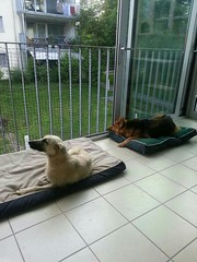 Foto 4 (citydogs4streetdogs) Tags: tansy