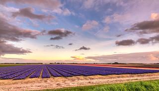 Dutch Space.