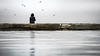 Ponder - DSC07336-6 (cleansurf2) Tags: wallpaper widescreen water wide waterscape people solo alone ponder chill reflection grey