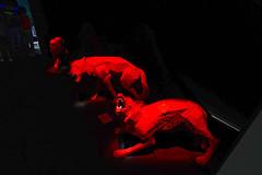 DSC07045_DxO (Reinhard Voelkel) Tags: labiennale venice venezia italy art kunst biennale biennaledivenezia damienhirst palazzograssi