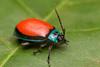 Insecto (Mary Torres E.) Tags: macro macrophoto macrophotography cucaron escarabajo angelopolis antioquia colombia marytorres canoneos70d
