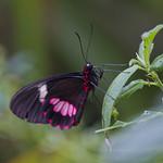 Butterfly macro thumbnail