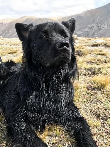 Photo - Bear