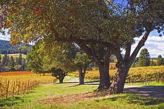 Rita Crane Photography: Anderson Valley Vineyards, Mendocino County