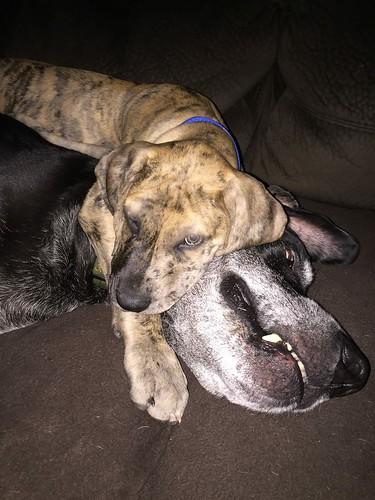 Photo - bo and duke