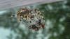 dinner time (sami kuosmanen) Tags: ristihämähäkki hämähäkki araneus diadematus finland forest flash fly kärpänen bokeh metsä macro eat kill dead death insect nature net web suomi summer spider beautiful colorful creative closeup luonto lähikuva europe kouvola kesä