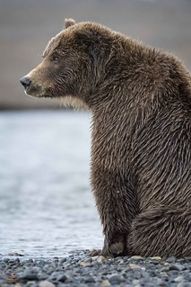The Fishing Bear
