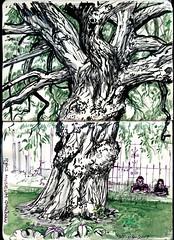 A tree in the Rijks Museum garden (Martin Blunt) Tags: brushpen crayon sketchbook sketch biro watercolour tree texture observational drawing