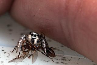 The Ant Slayer - _TNY_2329